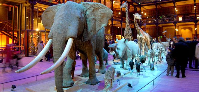 国立自然史博物館 − 進化大陳列館