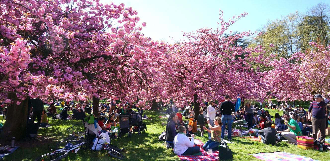 ソー公園でお花見!