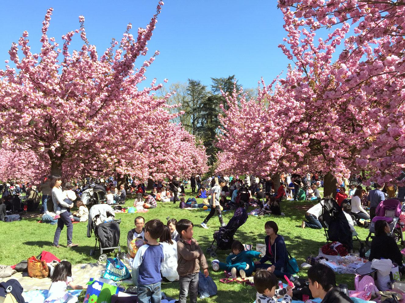 cerisier2015-3