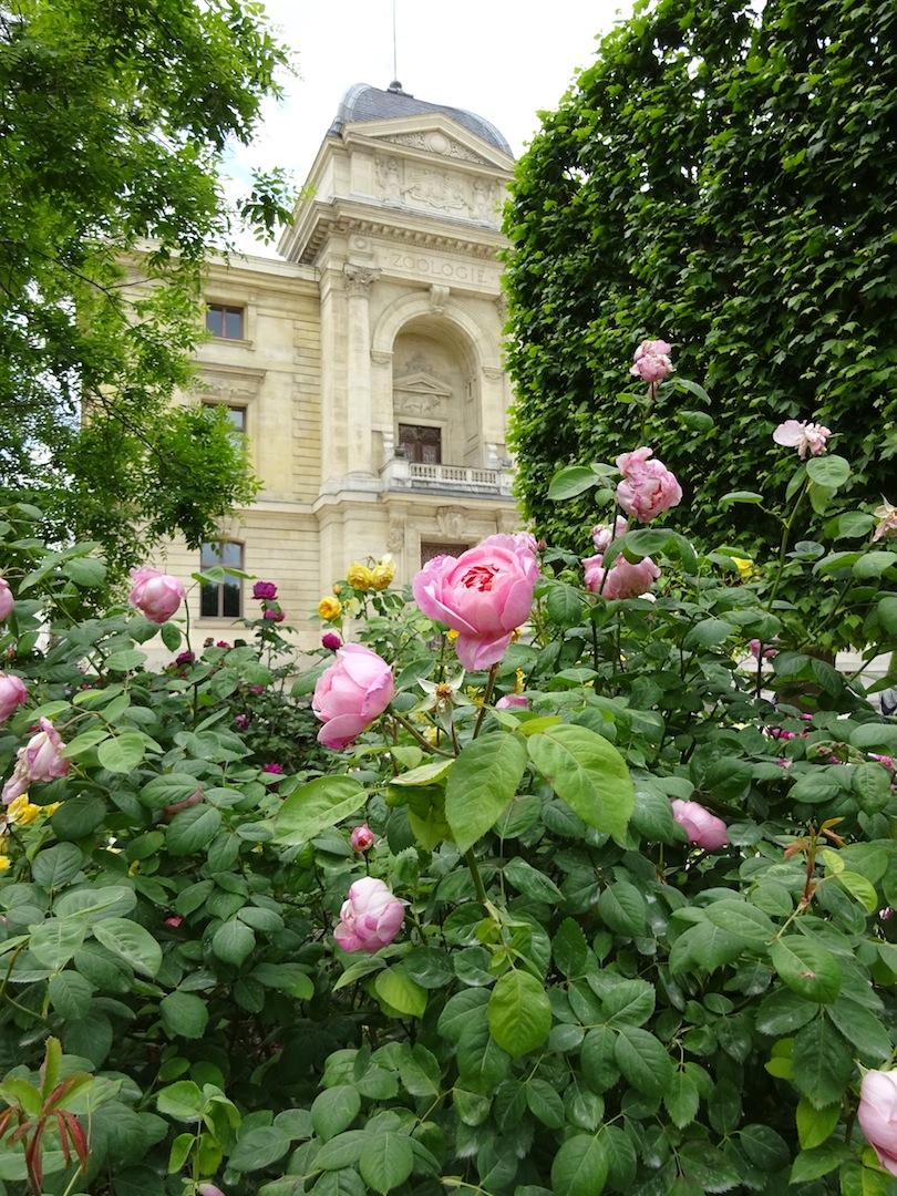 roses2015-1