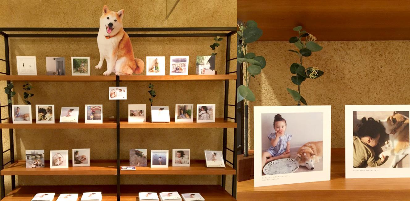 京都の書店の『フィロとポンポン』コーナーがかわいい!